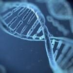 هل الجينات التي نمتلكها تأتينا فقط من الأباء ؟