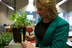 Le principe de Plant-e est celui de la pile microbienne : des bactéries du sol produisent des charges électriques qui peuvent être exploitées pour produire un courant. Cette flore se développe très bien autour des racines de plantes vivant dans des milieux saturés en eau. © Nicolas Delaunay, AFP Photo