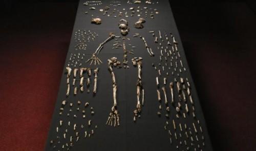 الهيكل العظمي ل هومو ناليدي