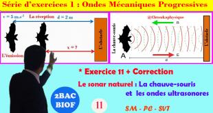 * Exercice corrigé 11 : Le Sonar naturel : La chauve-souris et les ondes ultrasonores,